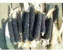 Хопи- фиолетовая кукуруза
