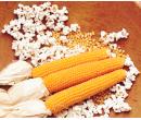Кукуруза сорт: Гостинец
